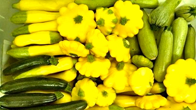 These yellow summer squash, zucchini and patty pan squash were gathered on May 14.