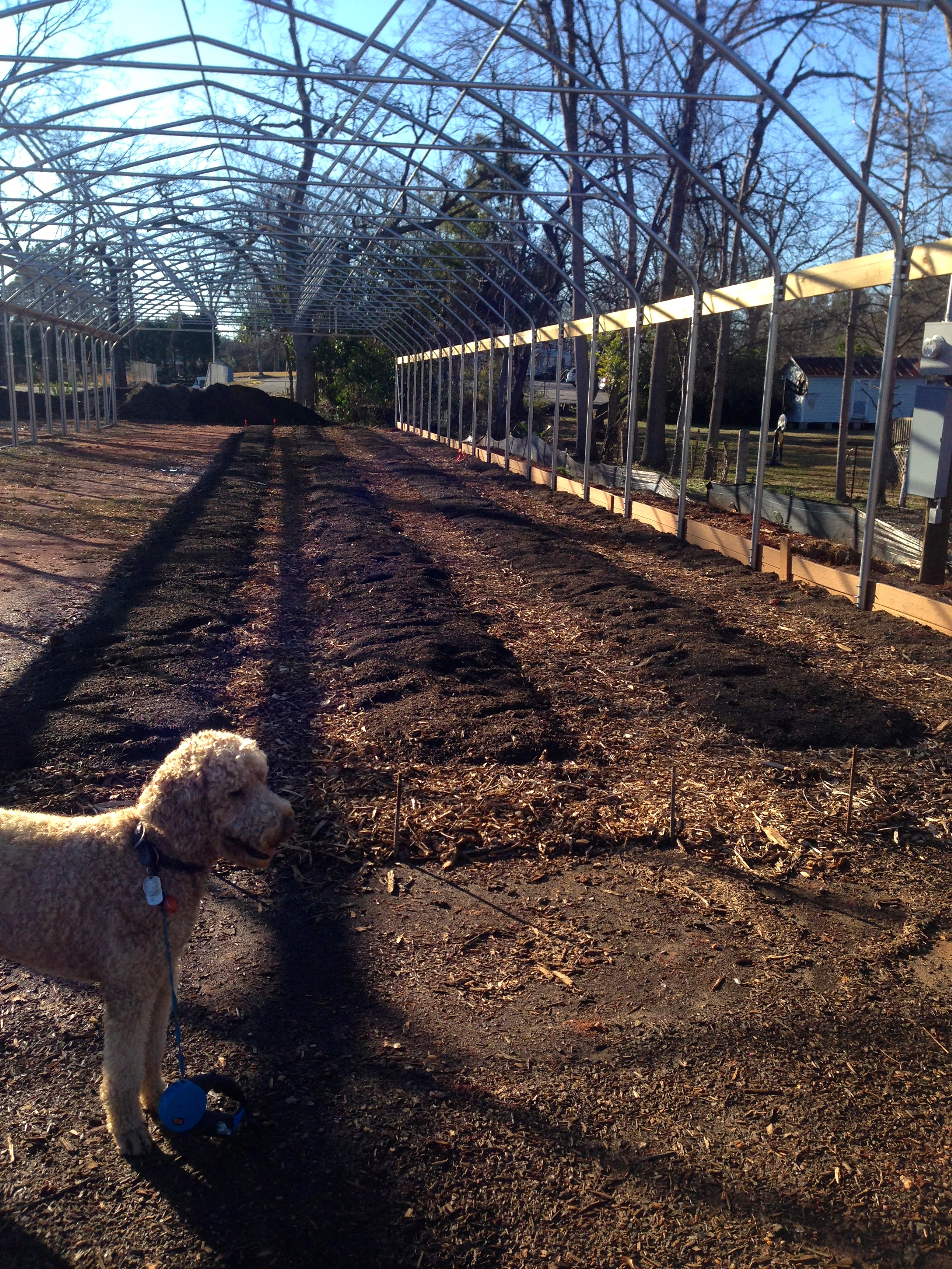 Although the plastic is not yet on the hoops, Jim and Tess have begun laying out the long rows for the new beds. Compost for the beds and wood chips for the walkways between rows are shown here.