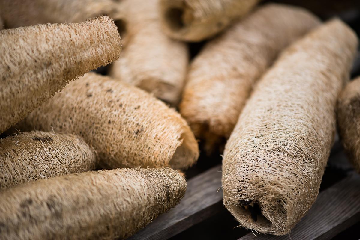 Natural loofah sponges grow in abundance in the summer garden.