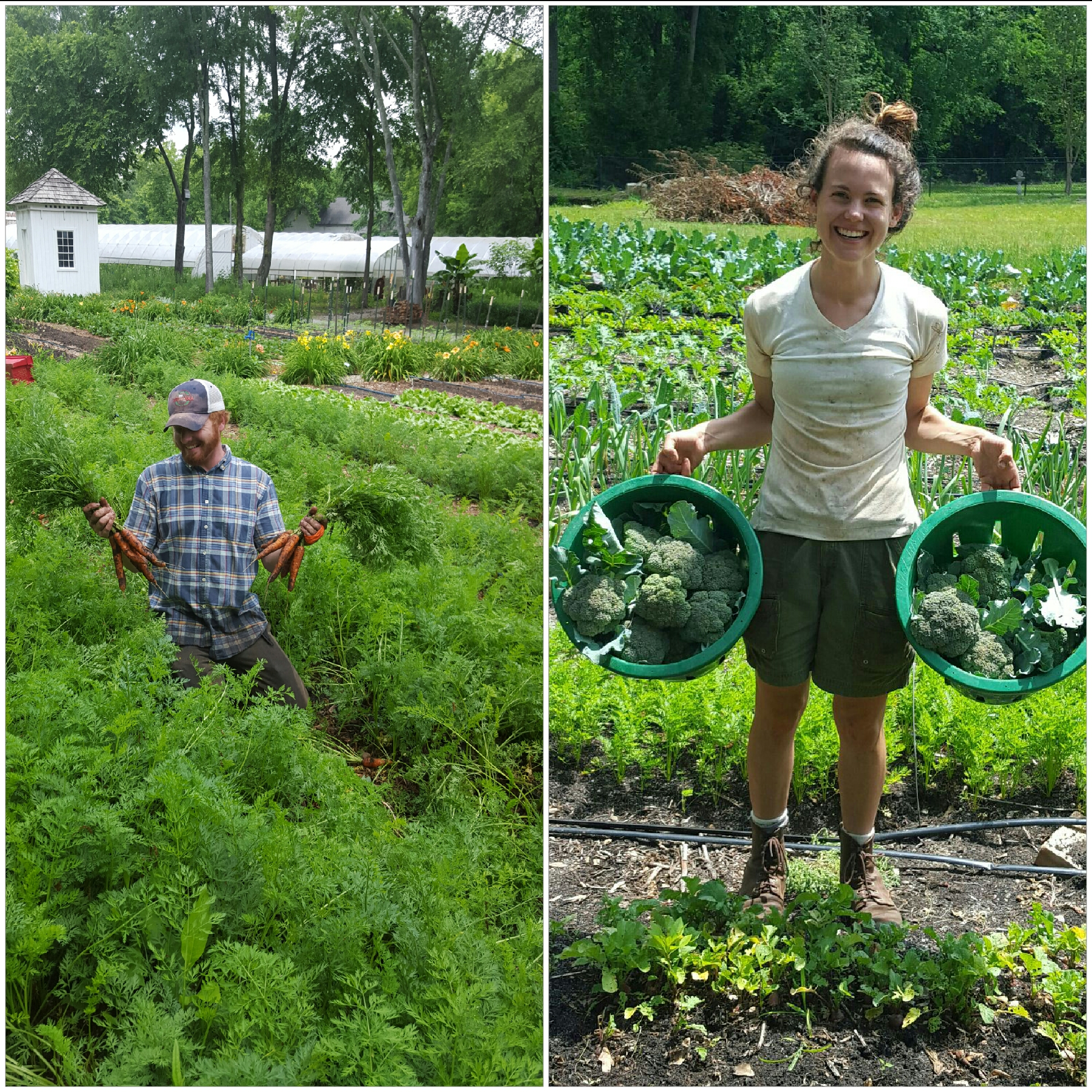 Elm Street Gardens managers, Josh and Jessica, are looking forward to welcoming local customers to the farm on Tuesdays and Friday from 3 to 5pm every week.