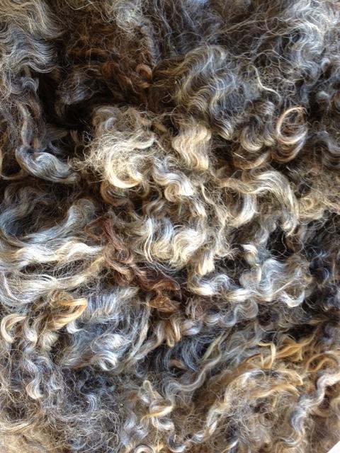 variegated fleece.jpg