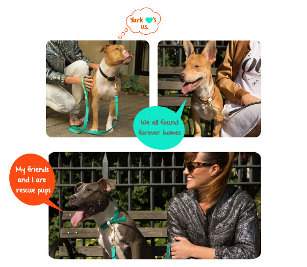 Scout (upper left), Foxy (upper right) and Jamie (lower) all found forever homes shortly following the lookbook shoot.