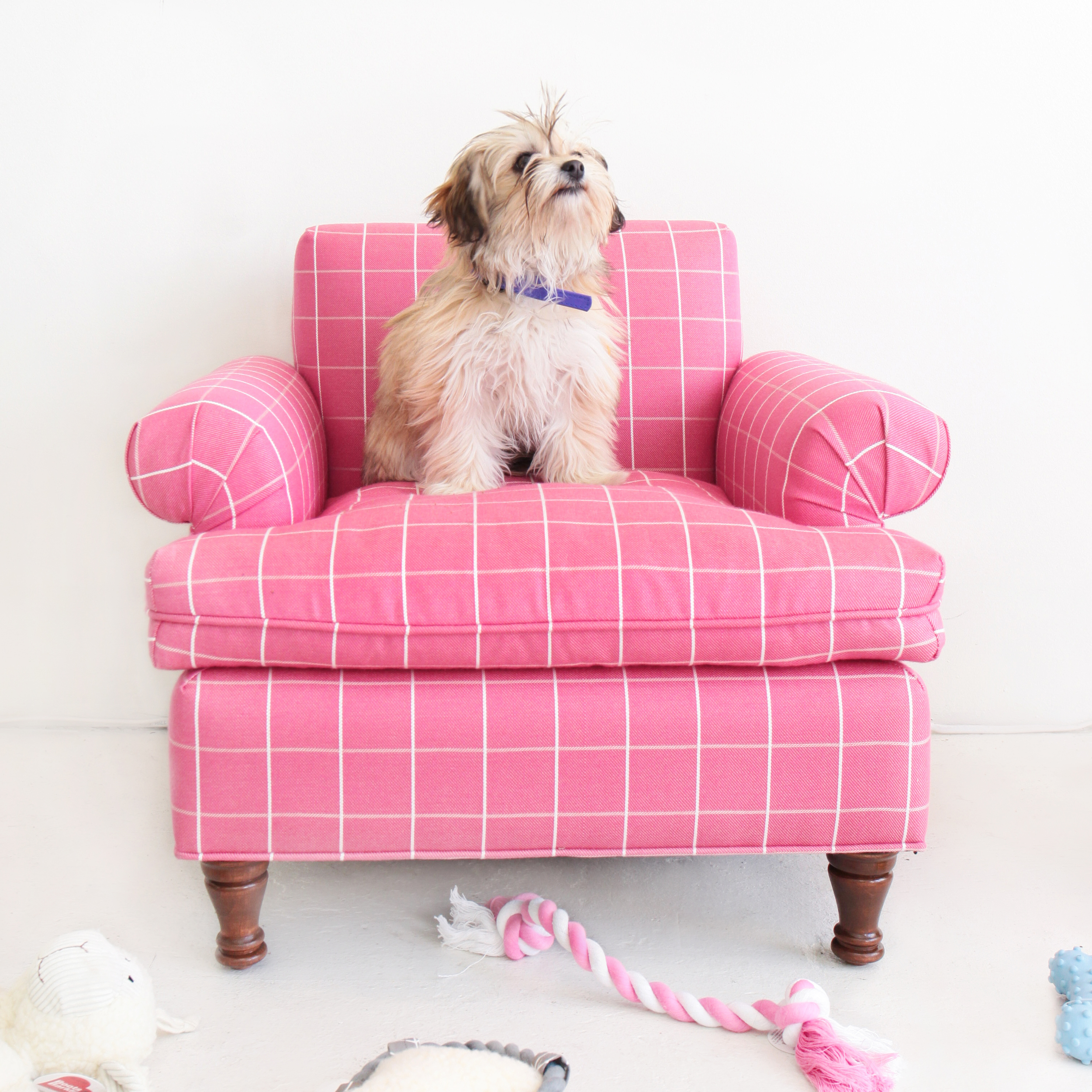 Emma: This little fluff isa 4-month old Wheaten Terrier / Maltese Mix. We can hardly even handle her 4 pounds of cuteness.