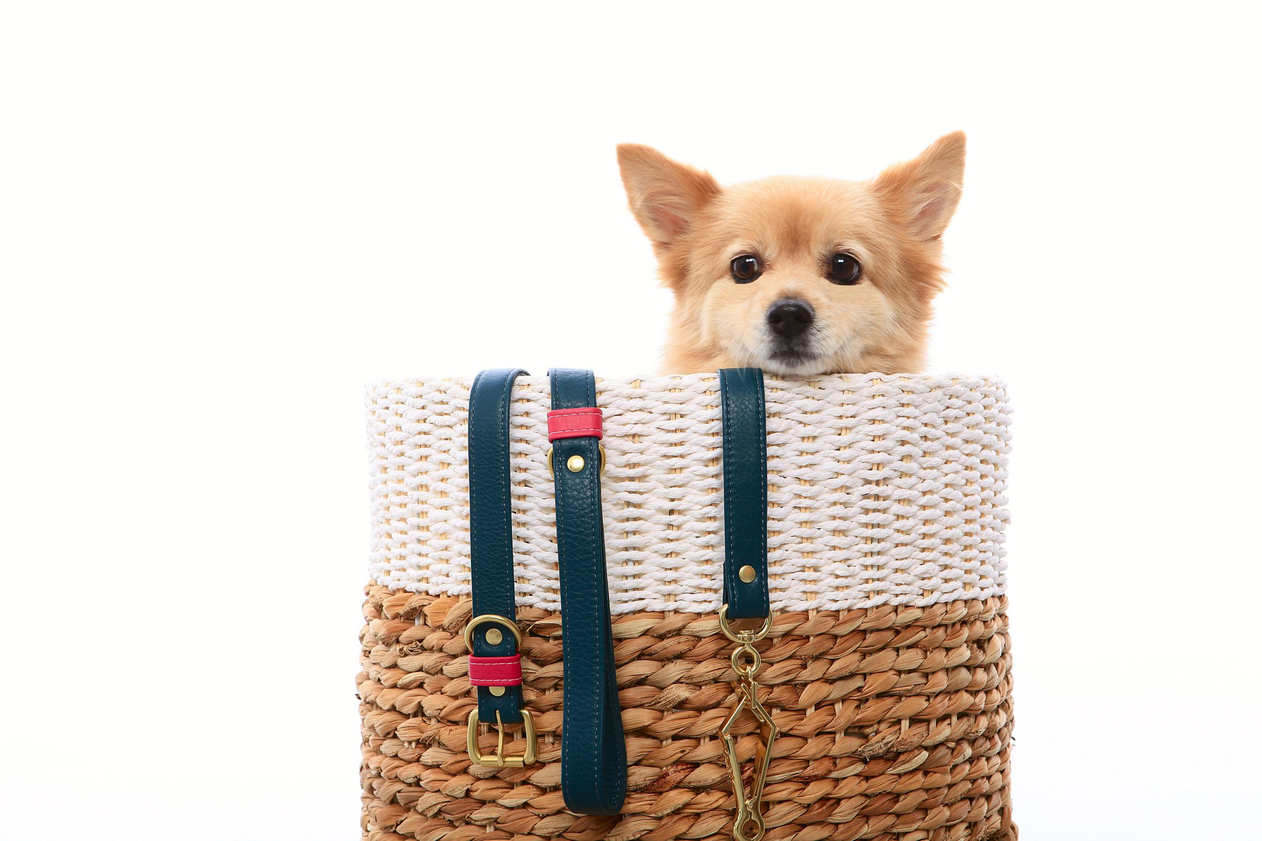 rufus in a basket.jpg