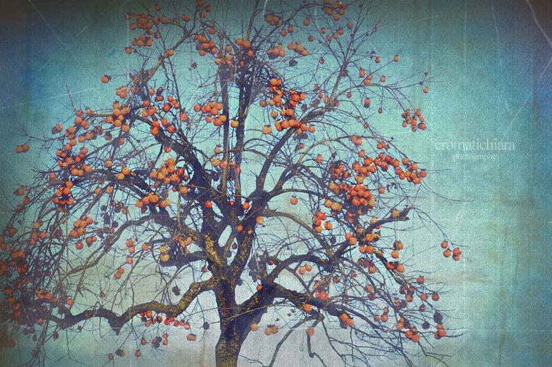 31_dicembre_06 copia.jpg