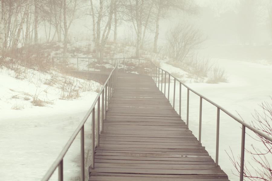 botanic-garden-fog-002.jpg