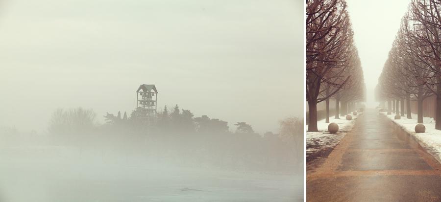 botanic-garden-fog-003.jpg