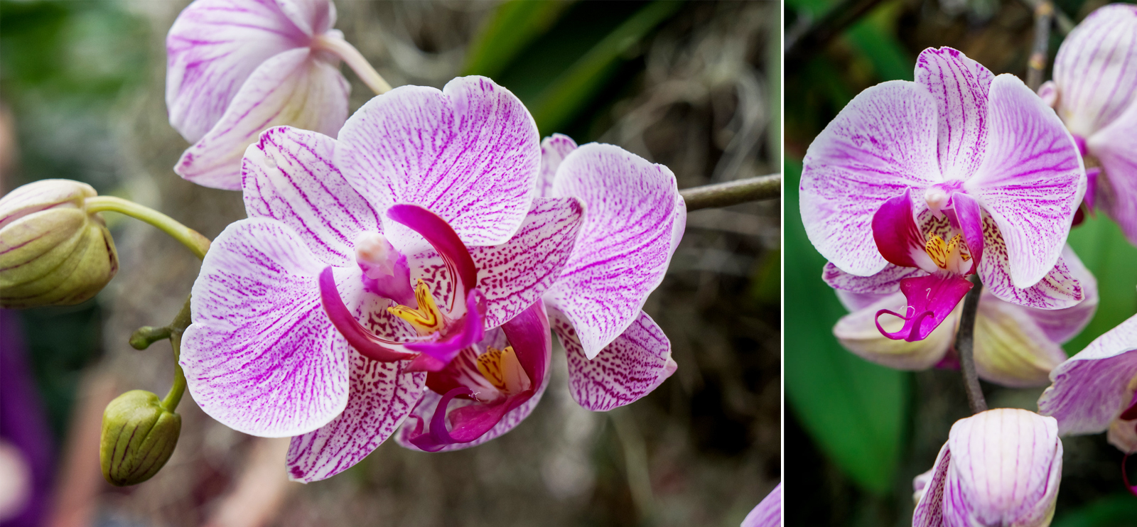 OrchidShow-Sony5.jpg