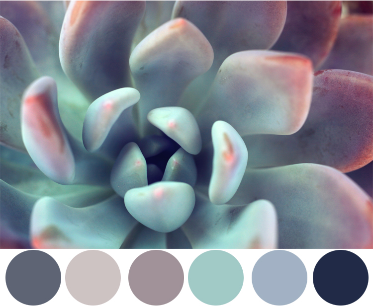 Wednesday Color Inspiration- Succulent