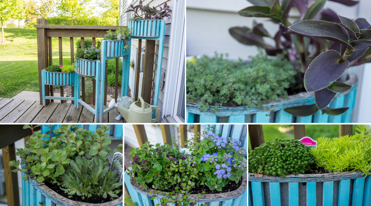 The plants in this planter came from Pesche's a week prior to Memorial Day weekend!