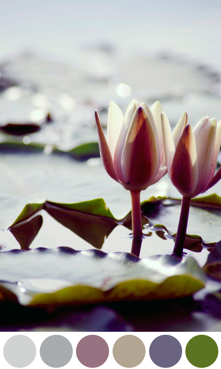 WednesdayColorInspiration-Waterlily.jpg