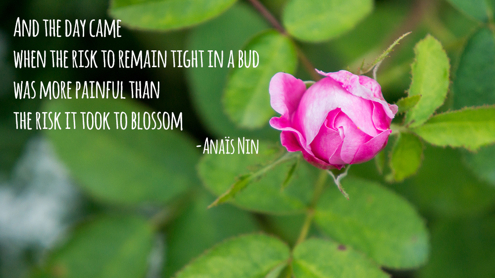 And the day came when the risk to remain tight in a bud was more painful than the risk it took to blossom-Anaïs Nin