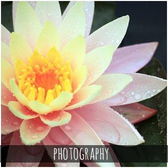 ab-new-photography-338x338.jpg
