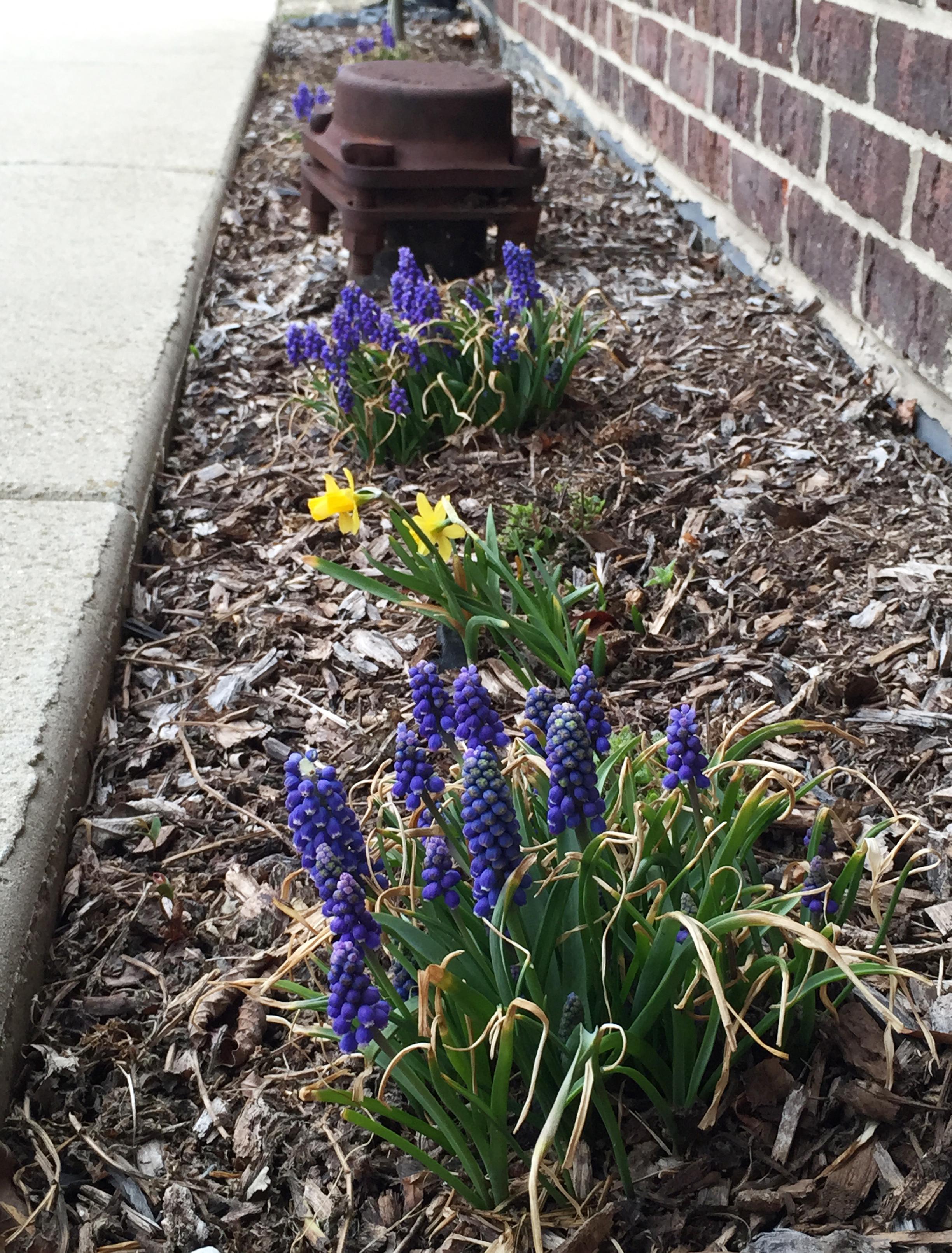 springtime side garden
