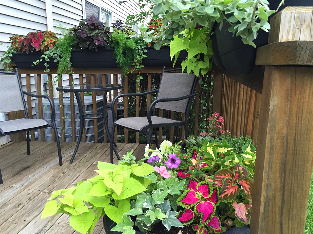 Five Simple Tips to Create Gorgeous Container Gardens