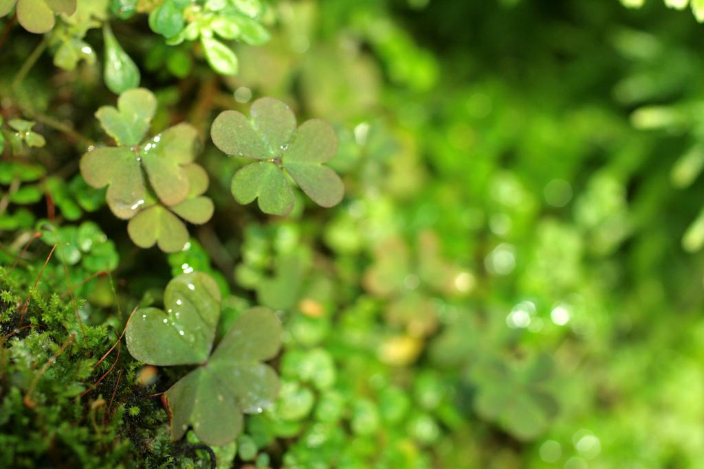 Happy St. Patricks Day, thinking about Ireland