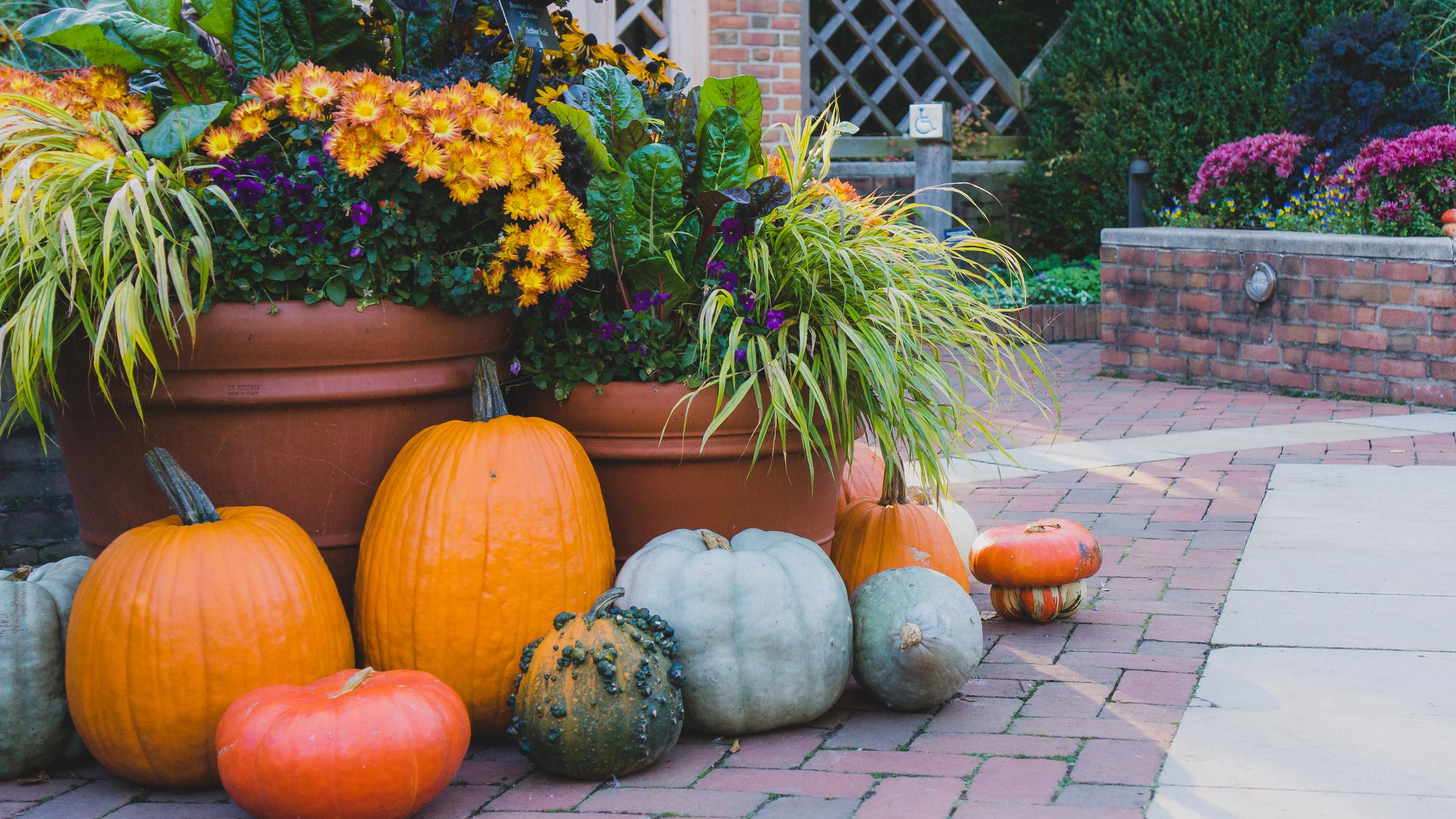 Taking Stock-01 Pumpkins