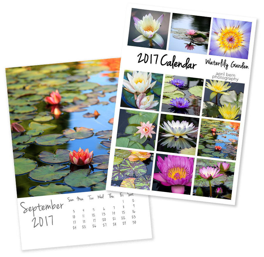2017 photo calendar - waterlily garden 5x7 desk calendar