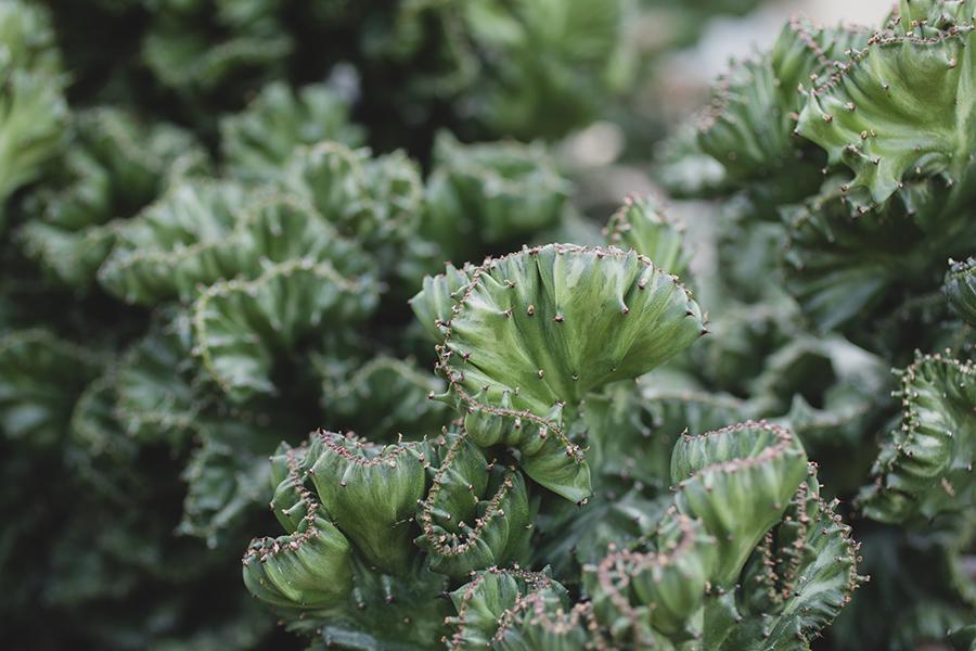 aprilbern-succulent-photography