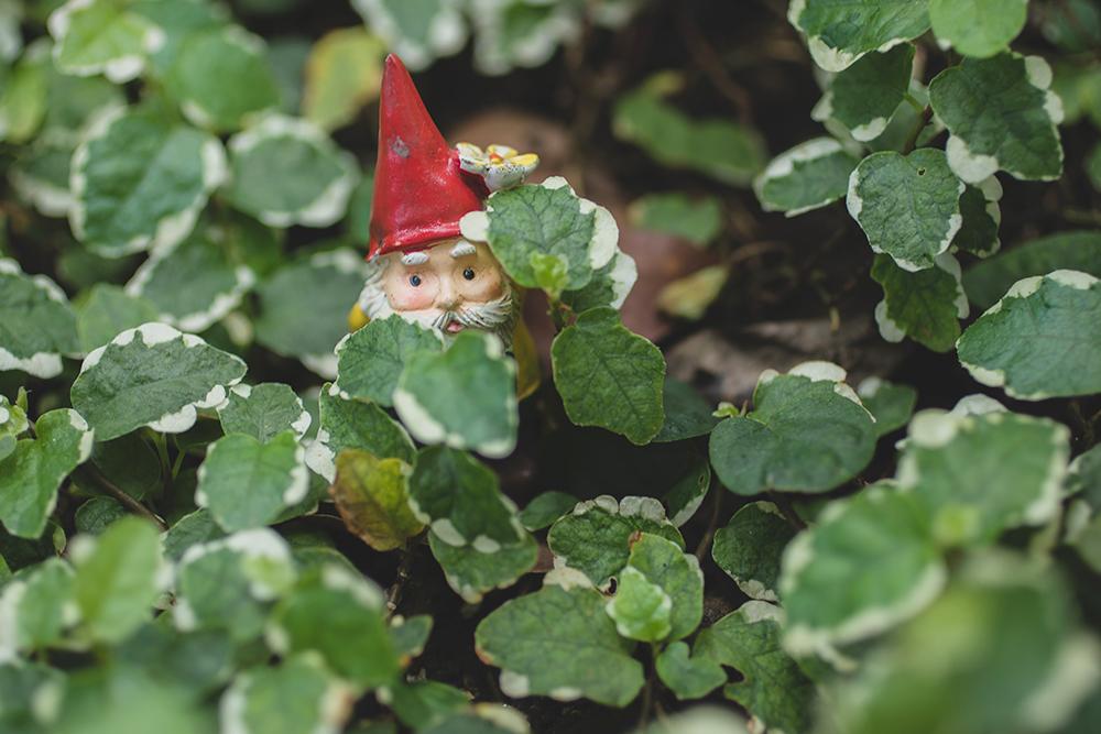 peek a boo garden gnome - aprilbern photography