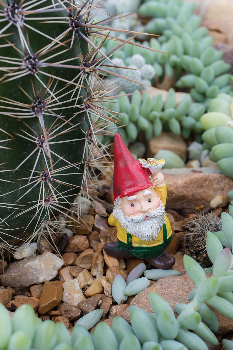 cactus garden gnome - april bern photography