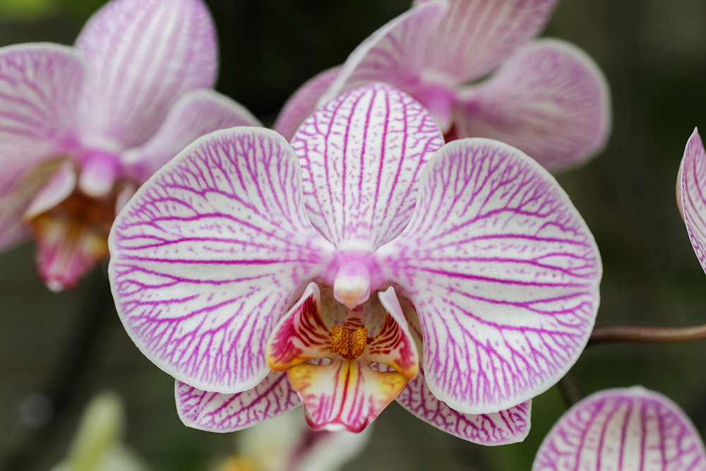 Orchid by april bern photo
