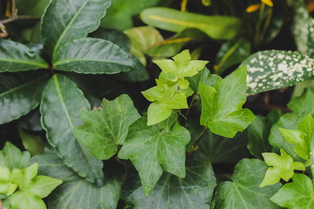 Nicholas Conservatory - Greenery