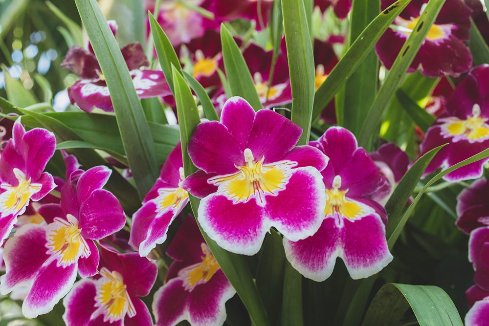 vibrant ochids - april bern photography