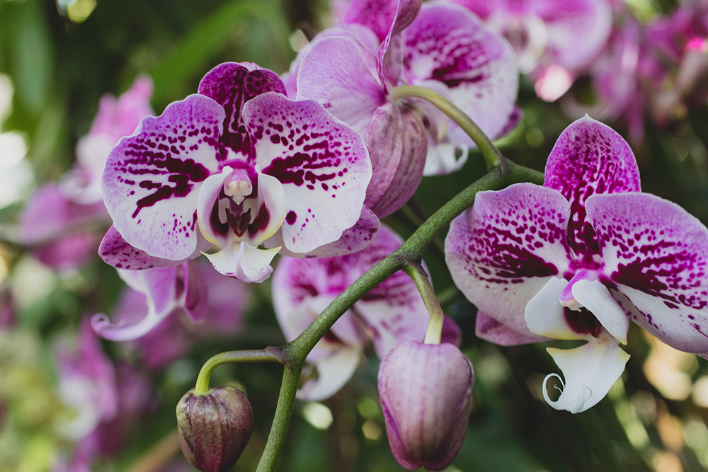 Orchid Fine Art Photography by April Bern
