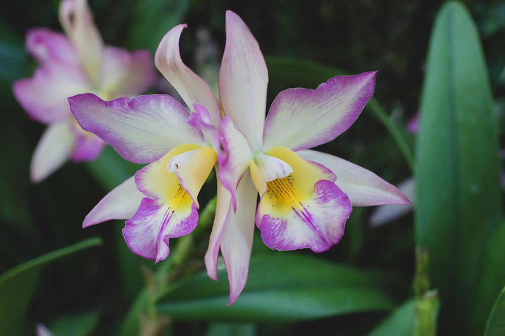 Couple- Orchid Photography by april bern