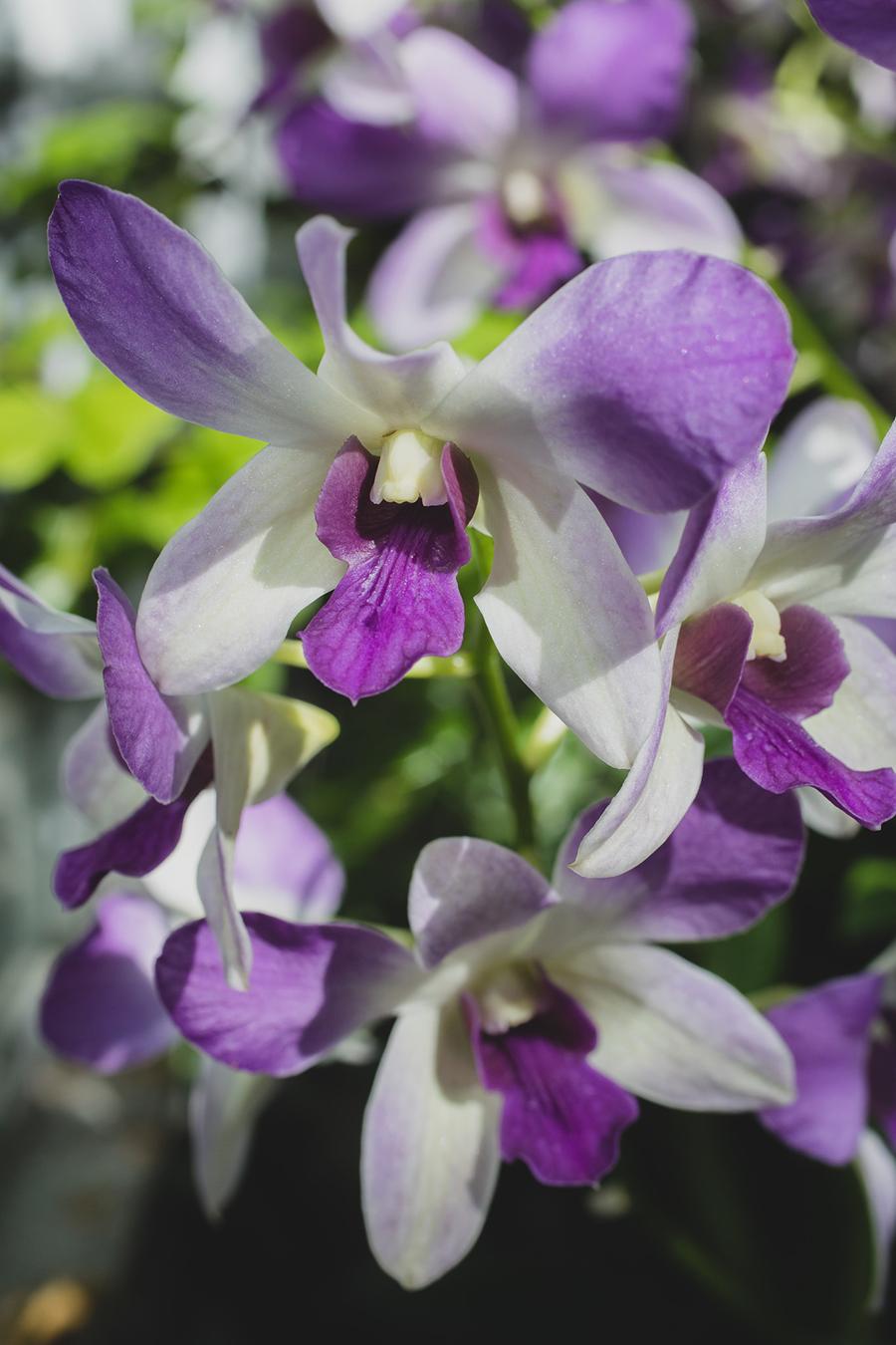 Orchid Art Print - april bern photography