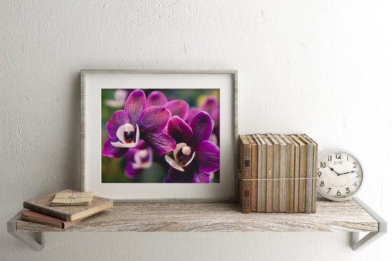 Exotic Orchid Fine Art Photography