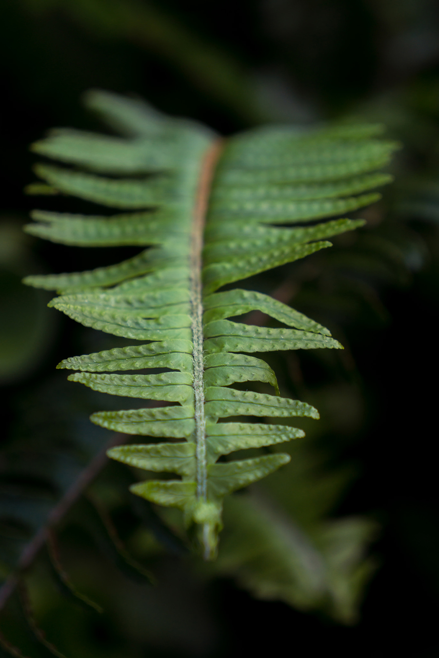 fern by april bern photography