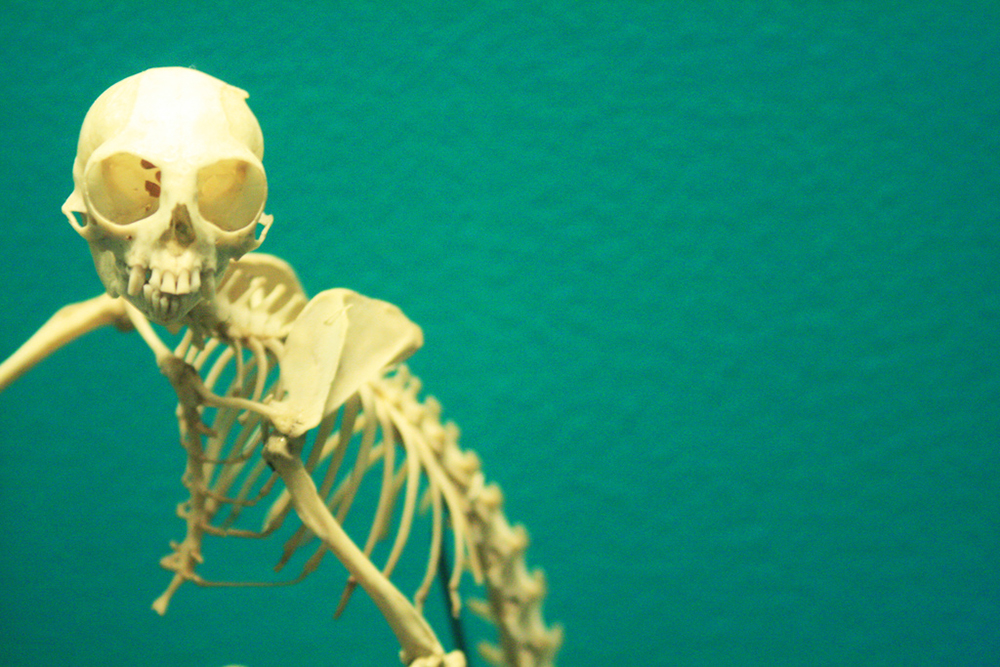 Field Museum Skeleton 077/365