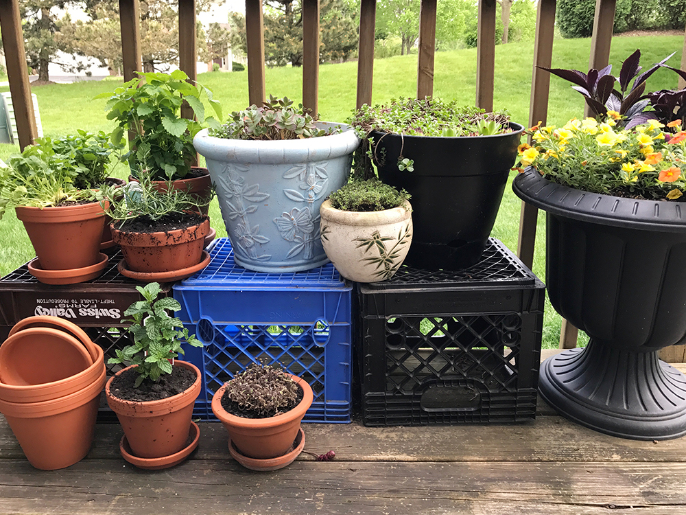 My herb and succulent garden. This year I have cilantro, basil (not planted yet), creeping rosemary, peppermint, lemon balm and creeping thyme.