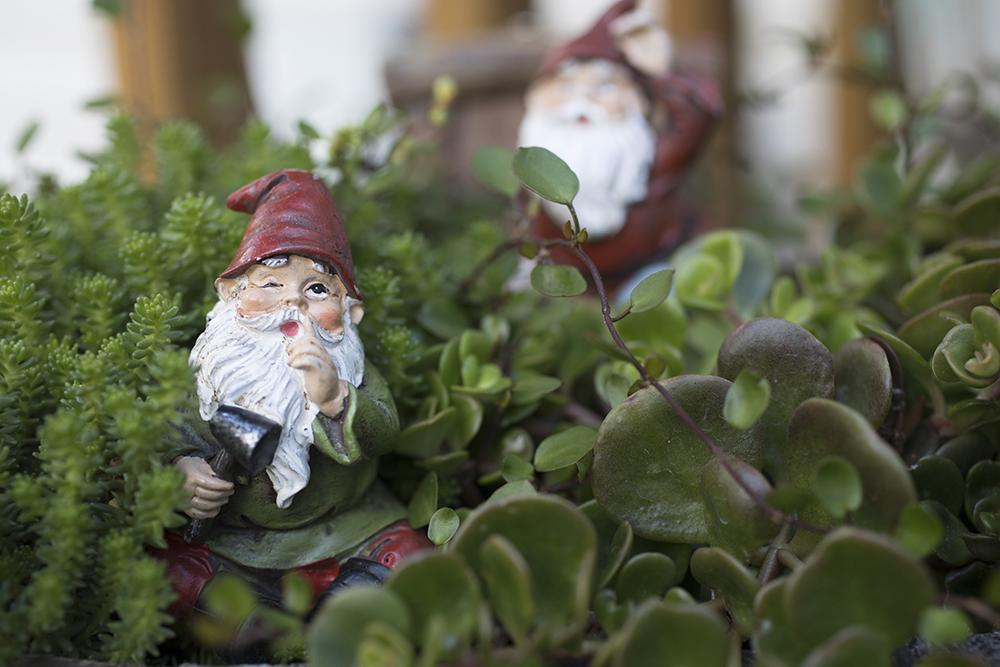 mischievous garden gnome