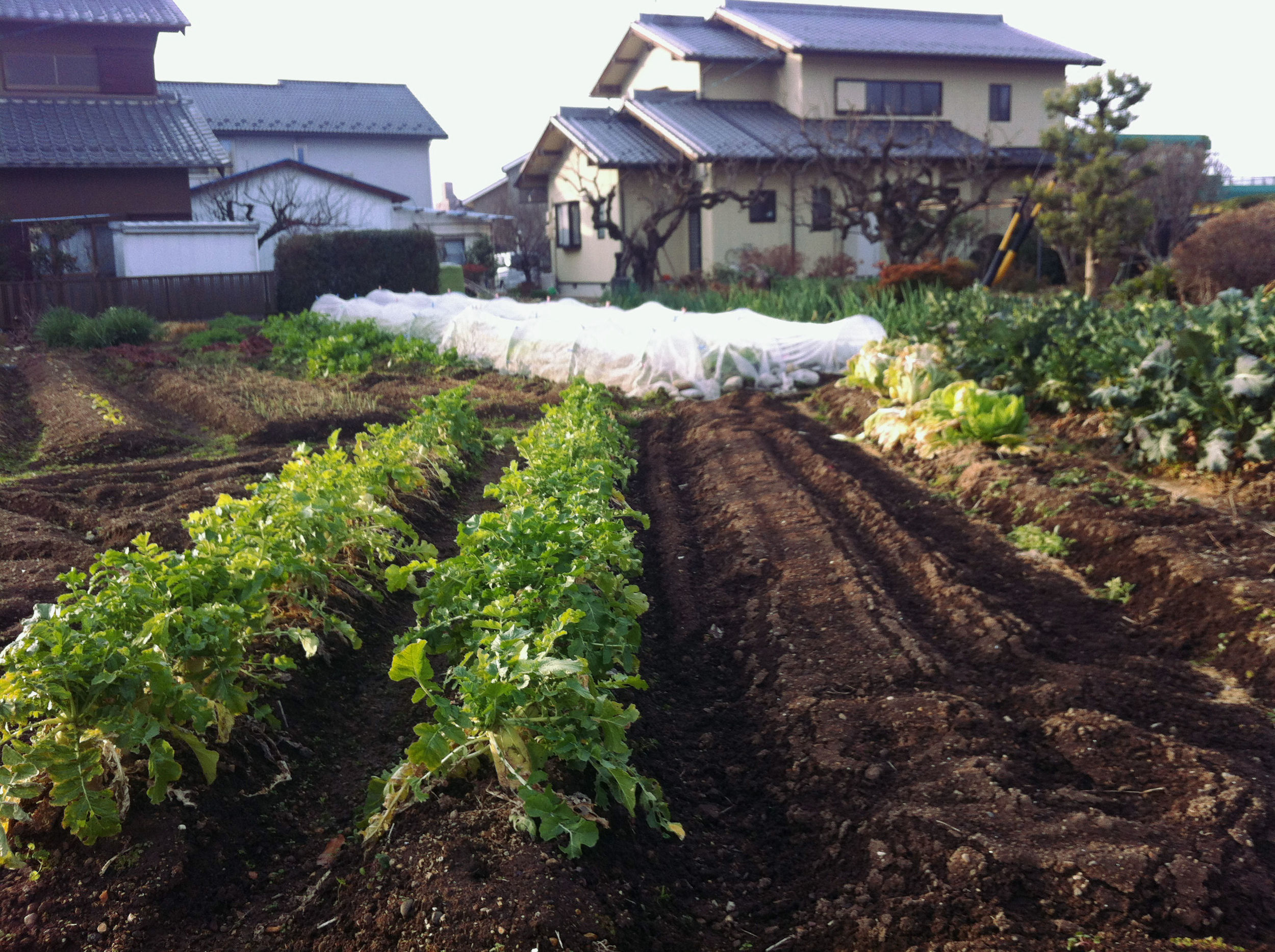 Many vegetables growing even though it's in the middle of winter!