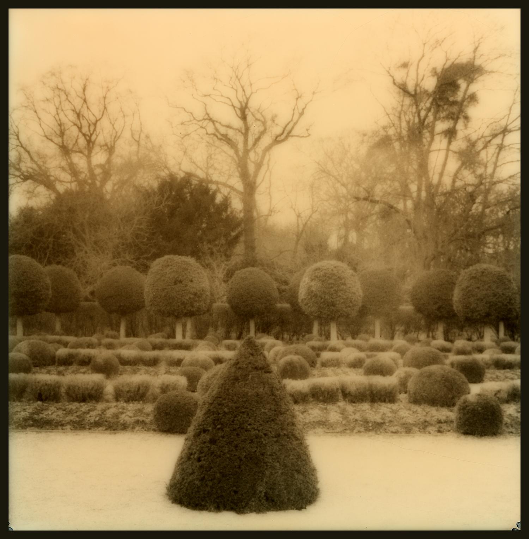 Parc Sceaux_Tree Types_GOA.3.03.17.020.jpg