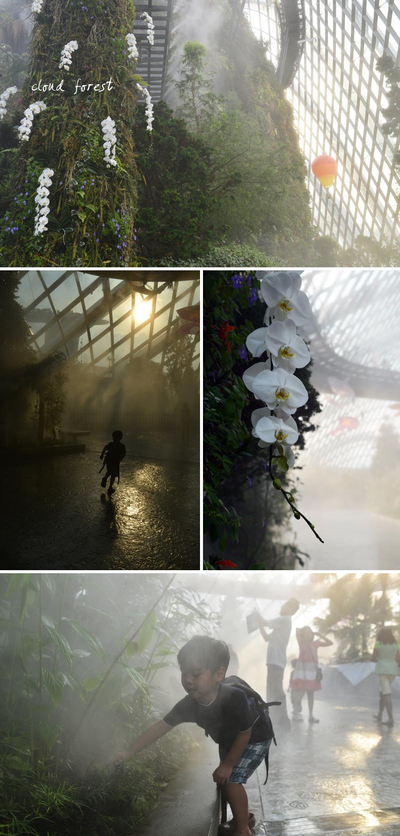 cloud forest | scissors paper stone blog