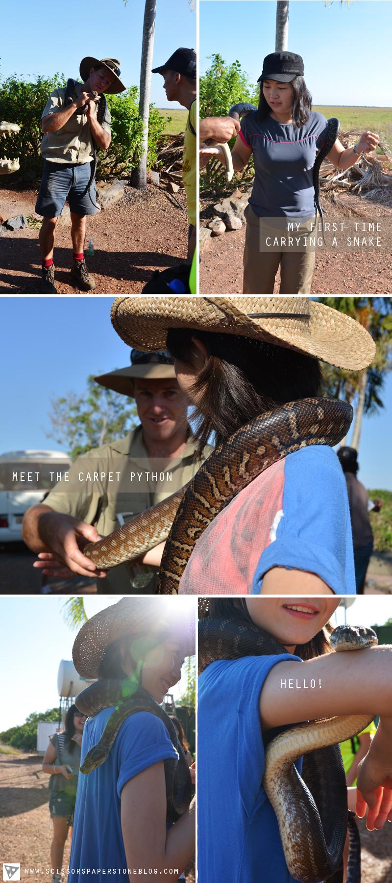 reptiles1_snakes.jpg