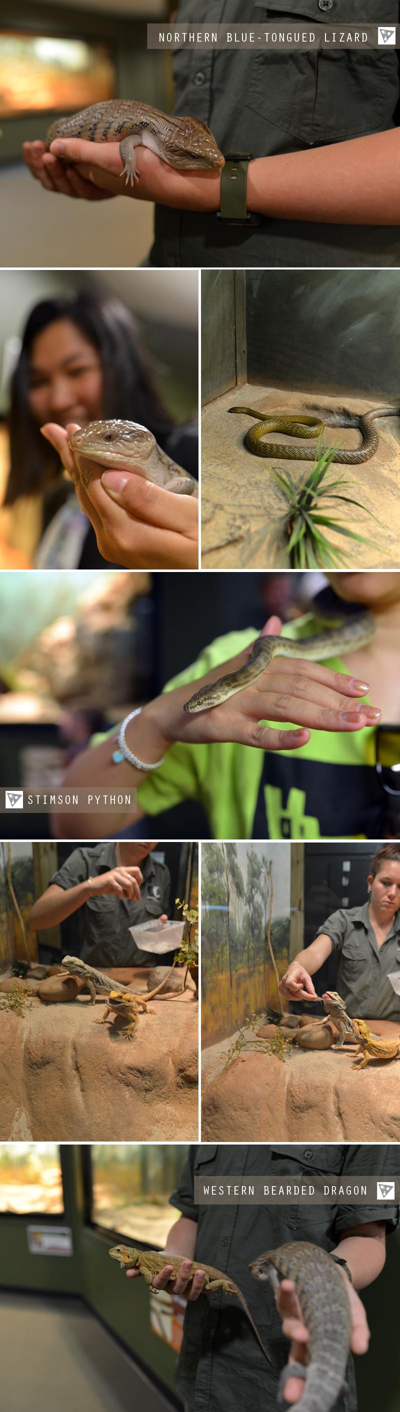 reptile11.jpg