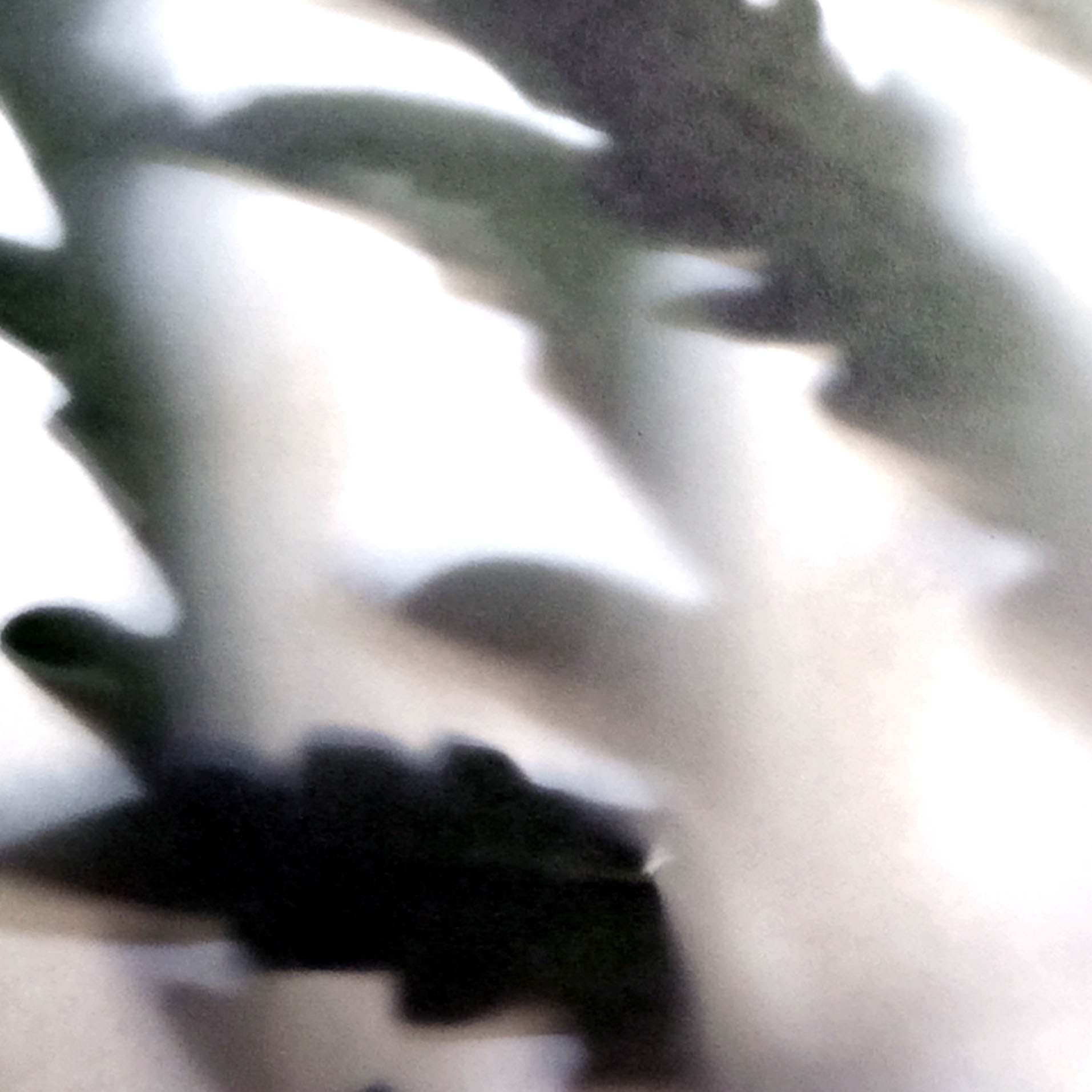 Artichoke 2, iPhone 5s photograph detail, from PAPER, PLANT, SUN series.