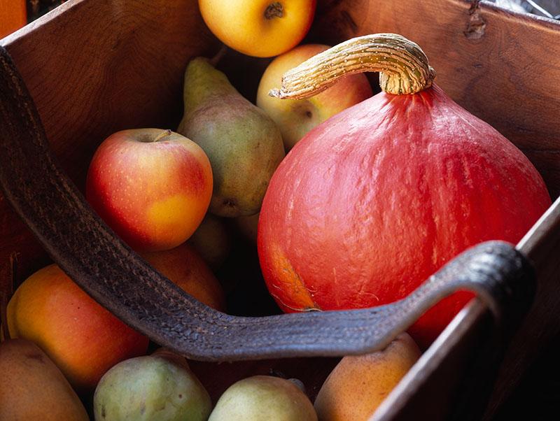 Plentiful Autumnal Harvest