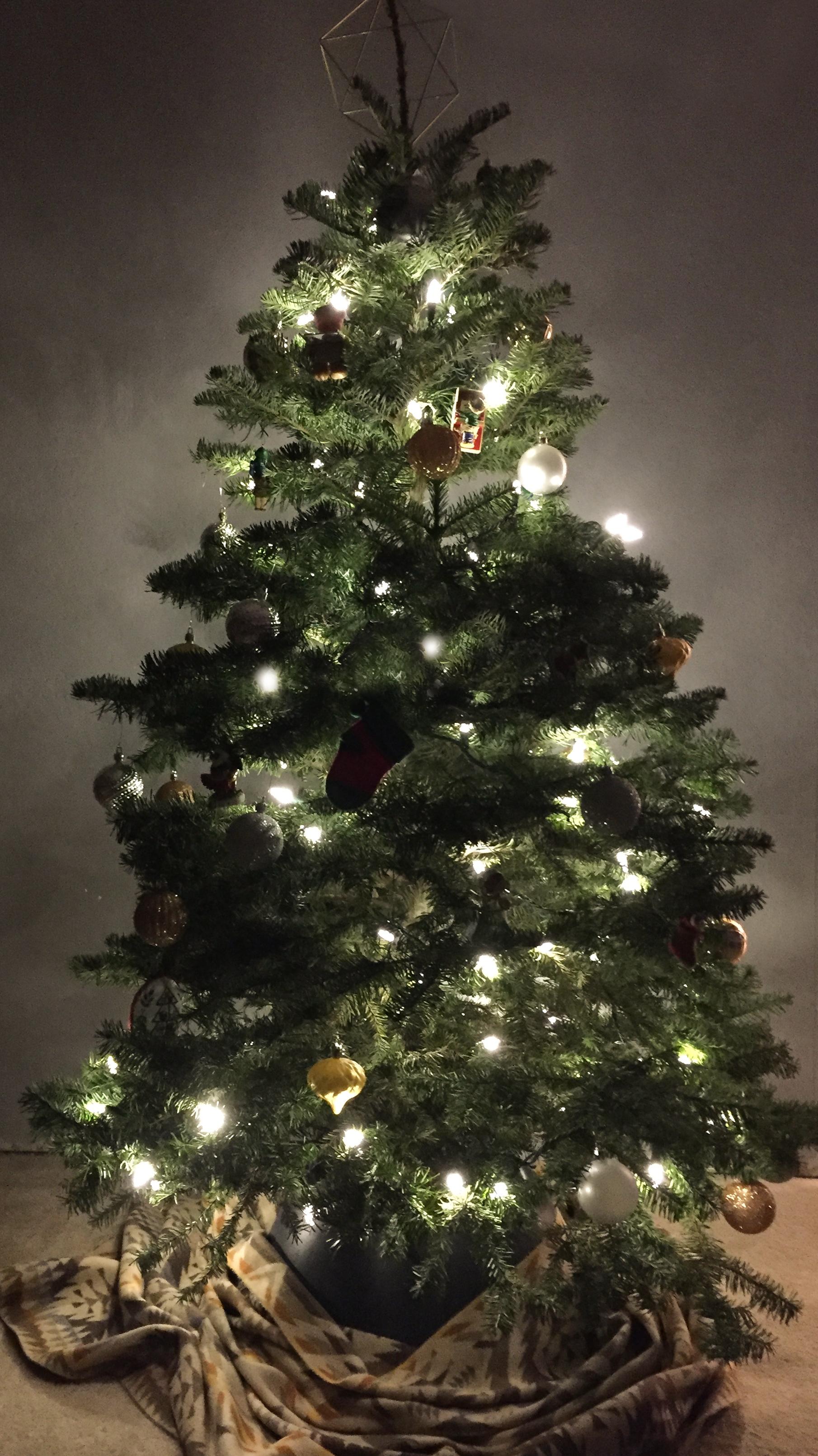 Chelsea Hipley   - 'Tis the season to sparkle!