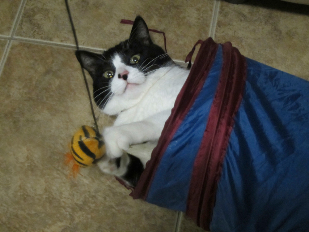 Mr Hercules playing in his tunnel