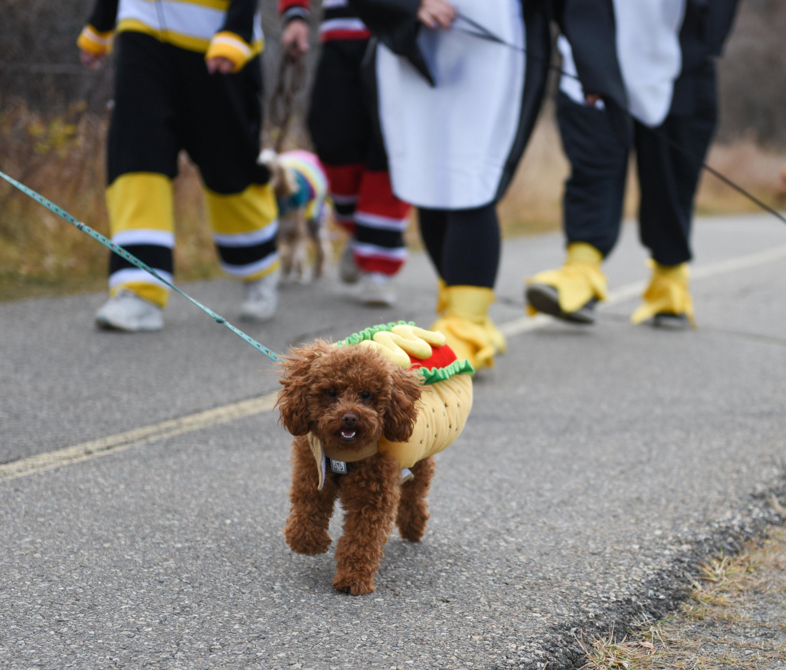20171027 Tails of Help 2017 Howloween Dog Walk SOT 0189.jpg