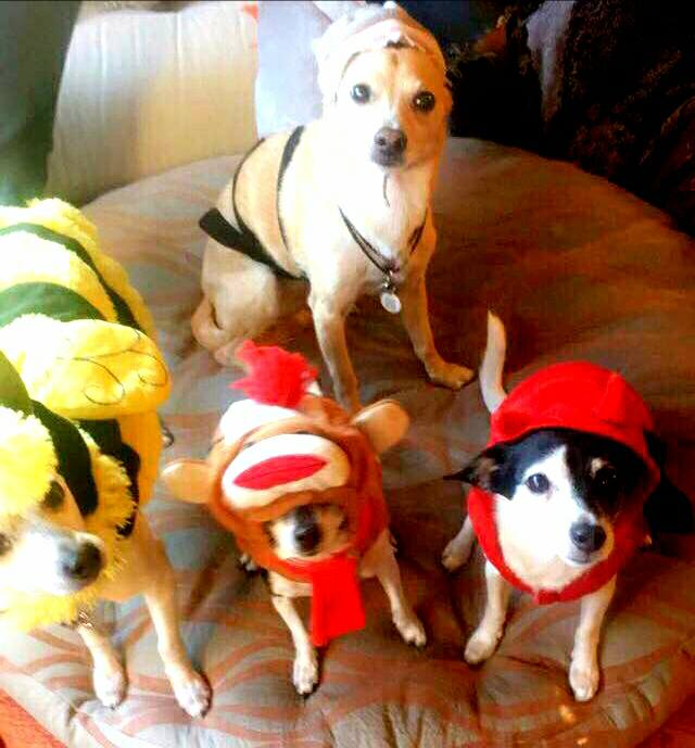 Dioji and pals ready for some holiday fun!