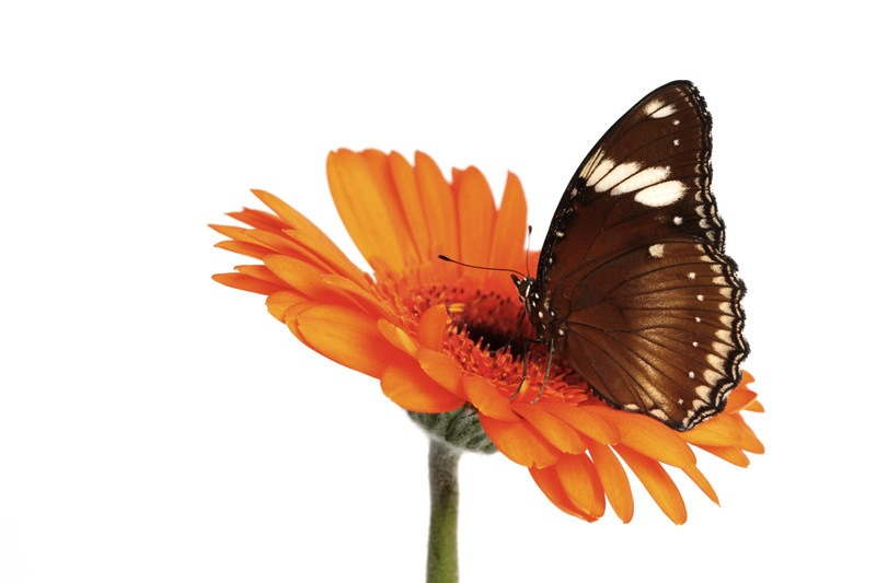 Wyatt Rehabilitation Physical Therapy and Lymphedema Treatment NJ butterfly