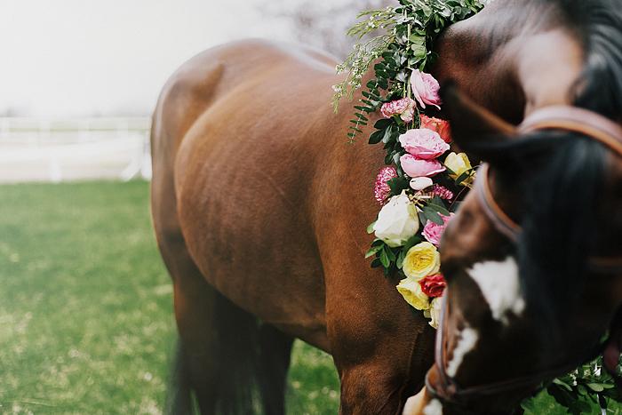 horse-stables-fonthill-006.jpg