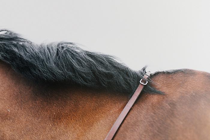 horse-stables-fonthill-034.jpg